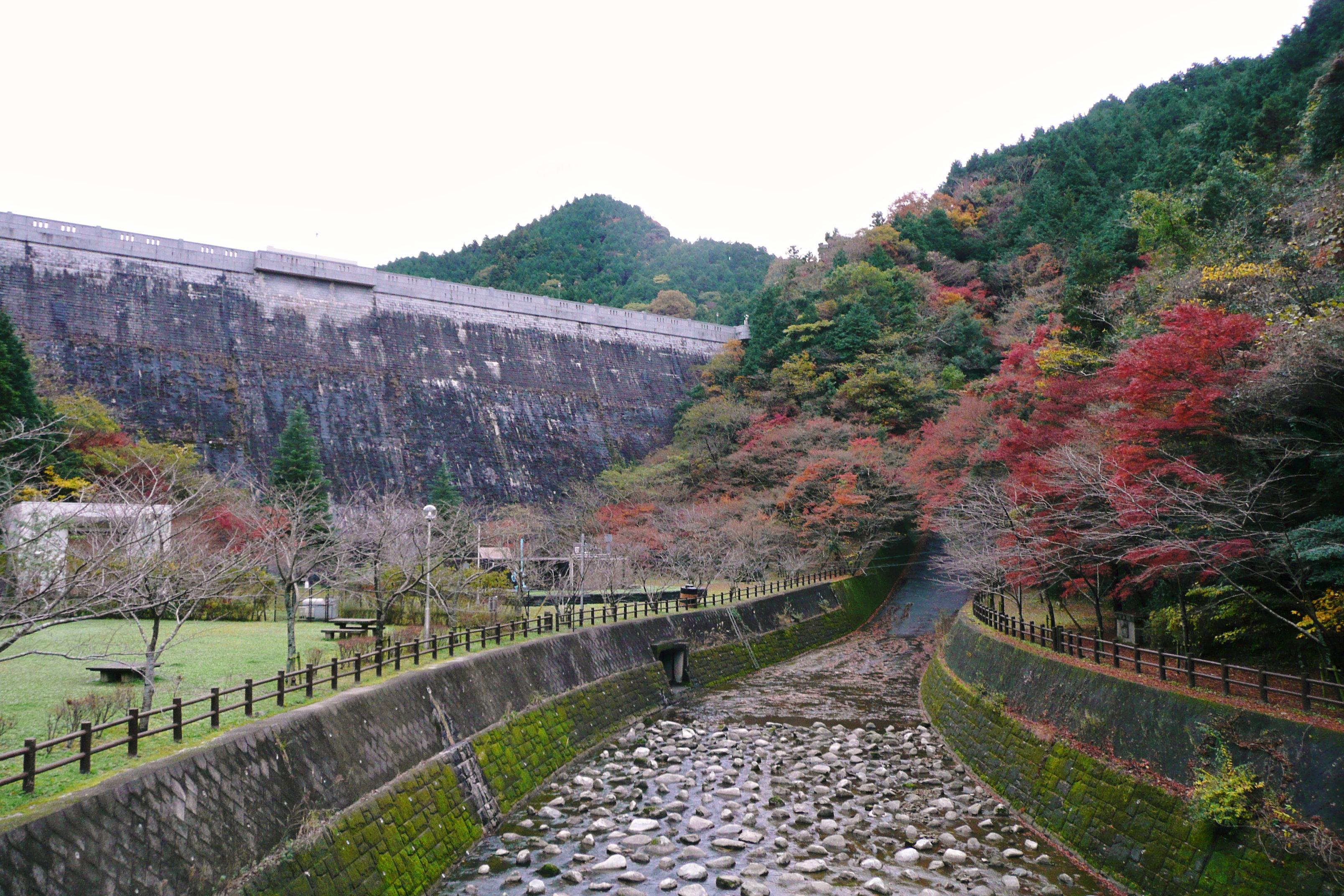 曲渕(まがりぶち)ダム: 自然人の日記